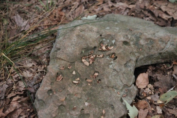 A spot where squirrels had been cracking acorns on the rock. Man is not the only one to use tools... or dinner tables.