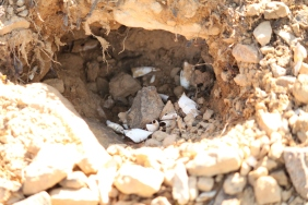 A turtle nest, most likely from an Eastern Box Turtle. The condition of the nest lead me to believe that it had been found and raided by predators (raccoons, fox, skunk, etc.).